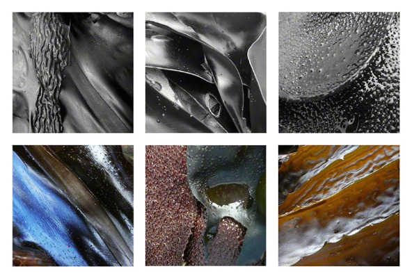 6 photos of kelp from Point Lobos, California