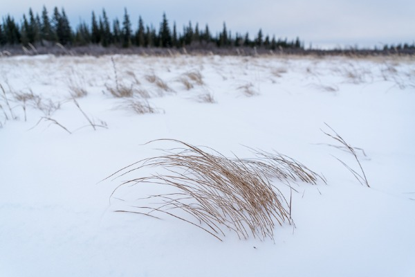 snowy landscape near Churchill, Manitoba