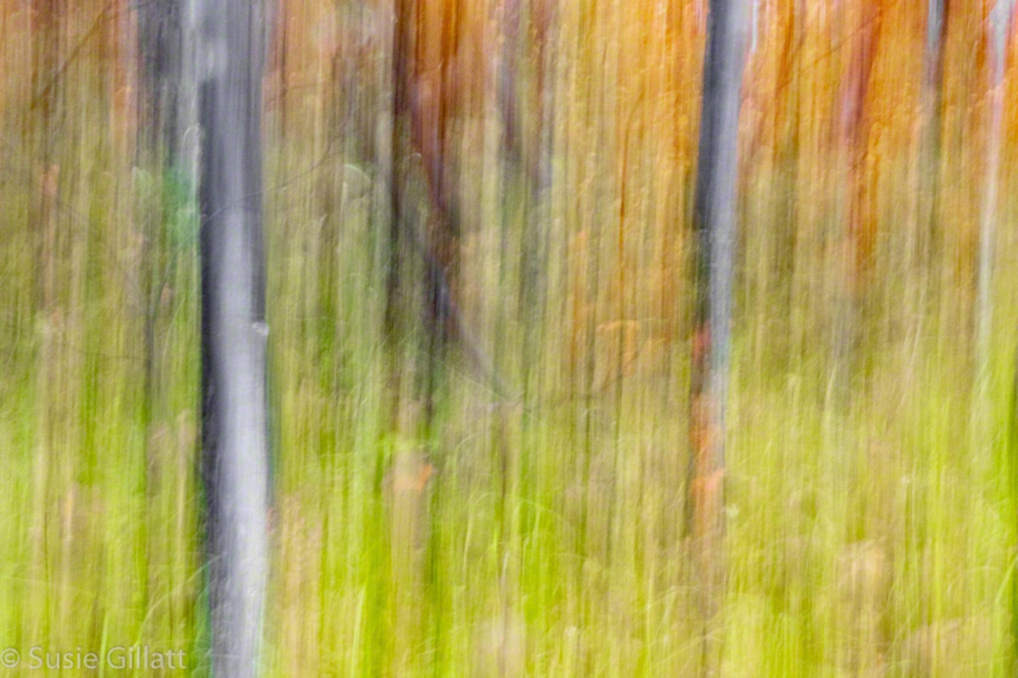abstract, fall colors, autumn trees